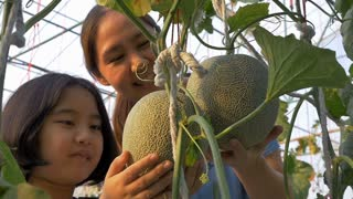 Slow motion of Happy Asian girl planting melon with her mother in the melon green house, Pan shot