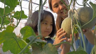 Slow motion of Happy Asian girl planting melon with her mother in the melon green house, Zoom in shot