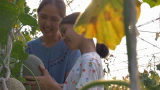 Slow motion of Happy Asian girl planting melon with her mother in the melon green house
