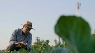4K Asian farmer examining plant leaf