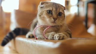 4K Funny exciting cat looking something for play with big eyes