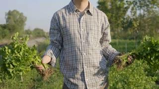 4K Happy Asian farmer harvest fresh vegetables at his farm, Tilt up shot