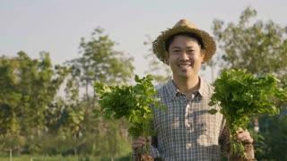 4K Happy Asian farmer harvest fresh vegetables at his farm