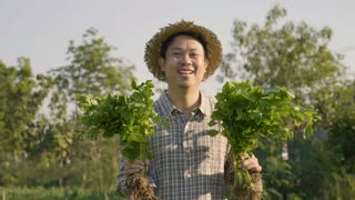 4K Happy Asian farmer harvest fresh vegetables at his farm