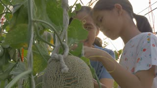 4K : Happy Asian girl planting melon with her mother in the melon green house