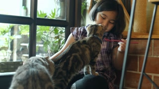 4K Lovely Asian girl feeding group of kitten cat with cat food, friend and family, Tilt up