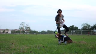 Slow motion Asian girl throwing ball for Beagle dog, Owner playing with pet outdoor together