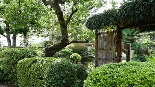 Slow motion of Japanese Garden Springtime