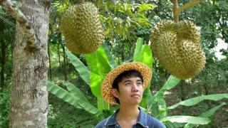 Young Asian farmer holding durain on his farm in Thailand