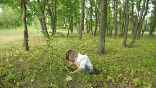 a little boy walks in the woods