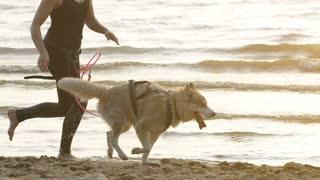 Female runner jogging with siberian husky dogs during the sunrise on beach