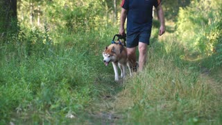 man walkimg with husky in forest