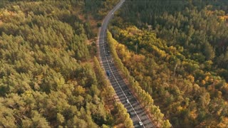 aerial shoot of trail in colorful autumn forest