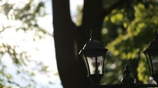 Beautifull naturally park in Lviv