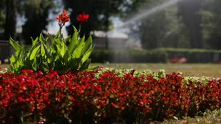 Close up water sprinkler spray watering, flower garden background