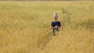 Cute happy little girl in the wheat field