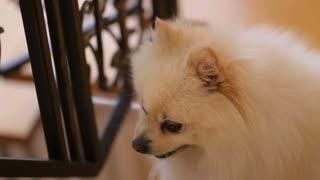 little fluffy happy cute dog