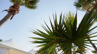 palm tree against the sky and wedding tent