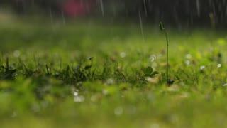 rain falling on the grass