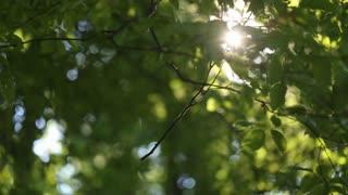 Sun shines through tree leaves