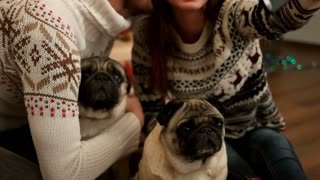 Attractive young couple in love smiling and making selfie with couple of pug dog near the Christmas tree. Top view. Close up.
