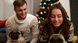 Happy couple in love smiling and having fun with couple of pug dog near the Christmas tree. Close up.
