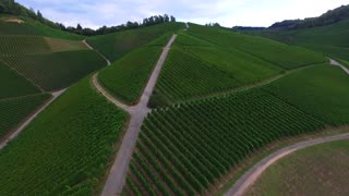 Landscape aerial view of the ripening vineyard hills under clear blue sky