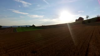 Sun shining bright above wheat field