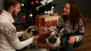 Young couple in love smiling and playing with couple of pug dog on the floor near the Christmas tree.