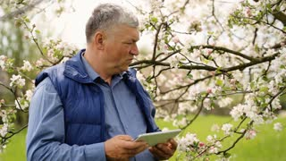 An old man holding a tablet in his hands staying near cherry tree.