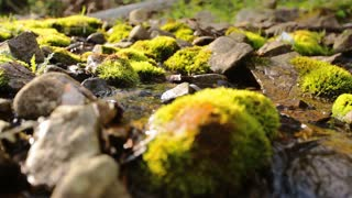 Close up of stones and rocks covered by moss along water stream flowing through green summer forest