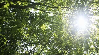 Green trees in summer