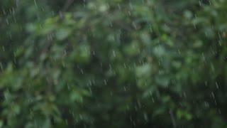 Rain falling over green leaves blurred background