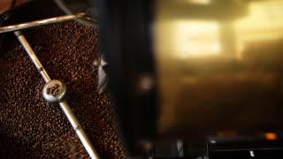 The freshly roasted coffee beans from a large coffee roaster being poured into the cooling cylinder. Person checks the quality.