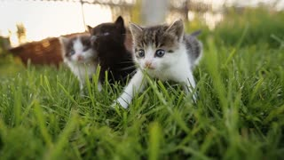 Three cute kittens walking on the grass.