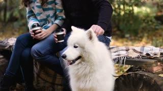 Close up of beautiful white samoyed dog with family background in autumn park