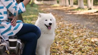 Happy family sitting with white samoyed dog in the park. Little girl playing with dog
