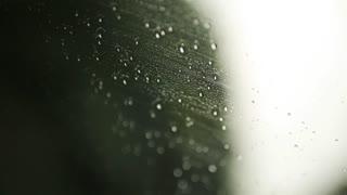 Rain drops on the window on rainy day. Green blurry background. Car window