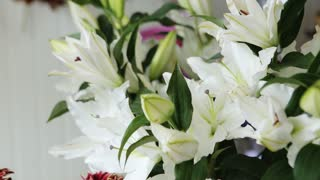 White lily flowers background .