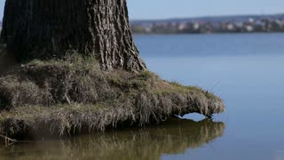 root of the tree above the water