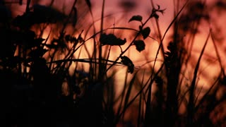 Back lit grass against sunrise background