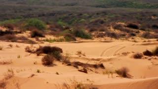 Bird flying in desert. Eagle flying over sand dunes in desert. Desert landscape with flying bird. Wildlife in desert. Desert panoramic view