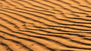 Bone on sand. Animal bone in desert. Drought in Sahara desert. Sand dunes with wave pattern and animal bone. Animal dead from drought in desert. Wave pattern on sand dunes. Animal bone in death valley