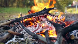 Bonfire in forest. Wooden camp fire. Campfire is burning. Preparing charcoal for barbecue on picnic. Man corrects bonfire with stick. Embers for grill. Summer outdoor camping. Nature background