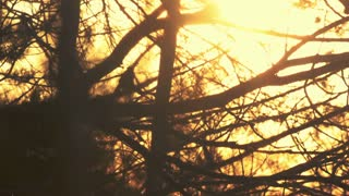 Branches silhouette at sunset. Nature background. Tree branches silhouette at golden sunset sky. Forest silhouette. Backlight tree branches. Sunset sky. Orange sunset sky. Nature pattern
