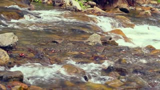 Closeup of rapids. Closeup of water flowing over rocks. Close up of small waterfall in spring. Stones lie in mountain river. Closeup of river in carpathian mountain at sunlight