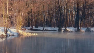 Forest lake in winter. White swans in sunlight. Misty morning in winter. Lake in winter forest. Trees in sun light. Fog over cold water. Cold weather in winter. Misty morning in winter forest