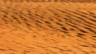 Golden sand dunes in desert. Sand dunes in Sahara. Arabian sand dunes in desert. Sand dunes background. Desert landscape in Sahara