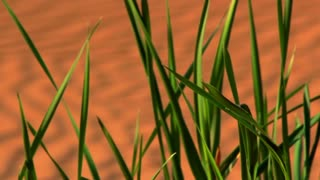 Green grass in desert sand dunes. Green plant in sand dunes closeup. Green grass macro. Spring in desert. Young grass in Sahara desert. Fresh grass in sand dunes. Nature backgrounds. Green bush in desert