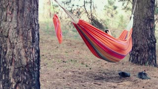 Hammock relax. Young woman using smart phone in hammock at forest. Outdoor recreation. Girl using mobile phone in hammock. Girl lying in hammock with phone in hands. Relaxation in hammock